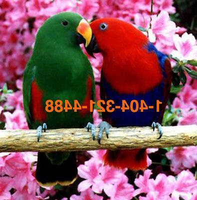FULL BULB Bird 6500 k 75w