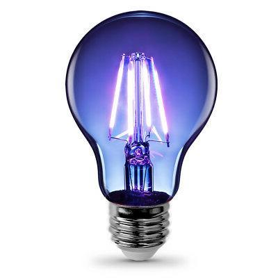 Feit Glass Filament Light A19,